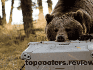 bear proof coolers reviews